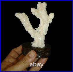 Antique Chinese Qing Finely Carved White Coral Guanyin And Attendant Figurine